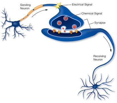 neuron_signalling_utah